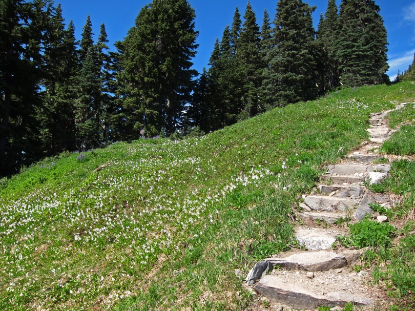 High Divide trail with stone steps & avalanche lilies