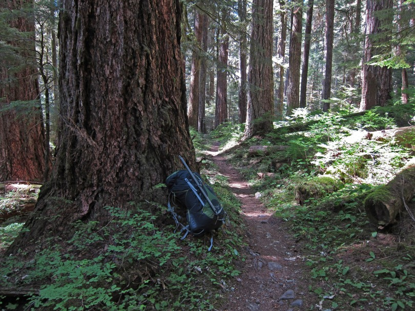On the High Divide/Seven Lakes Basin Loop: Sol Duc Valley trail at ~2500' elevation