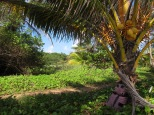 Path along the beach to the windward lodges