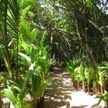 Pathway at Casa Iguana