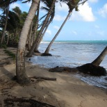 IMG_3773 beach erosion Iguana 2