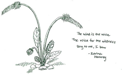 Wind is the voice for the wildness by Zarina Hackney
